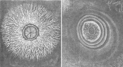 მარცხნივ: დადებითად დამუხტული ლიხტენბერგის ფიგურა; მარჯვნივ: უარყოფითად დამუხტული ლიხტენბერგის ფიგურა