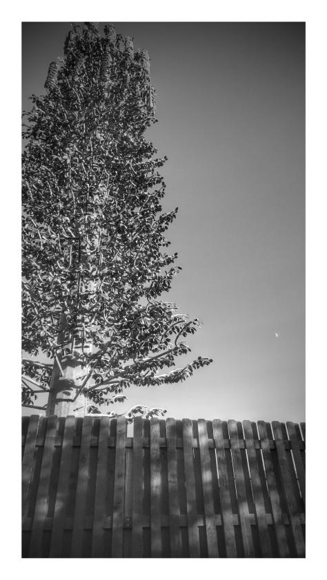 steel_tree
